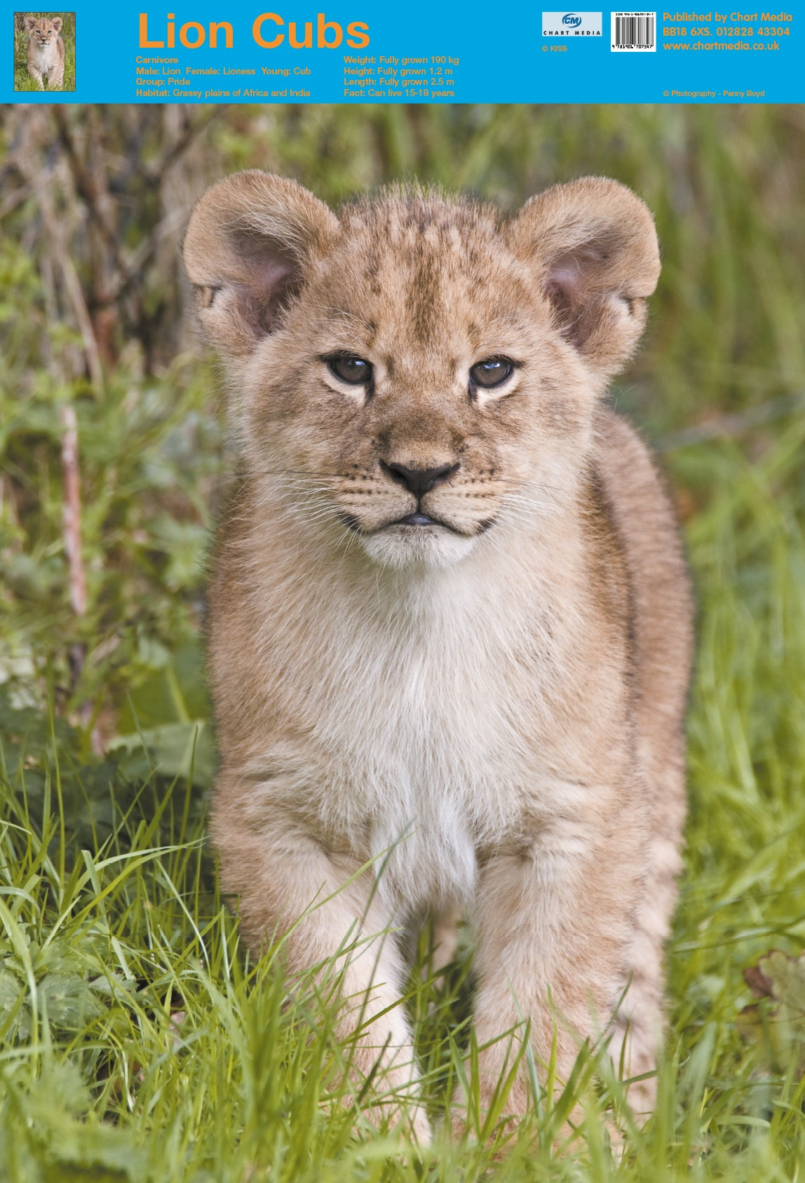 Posters Uk Lion Cub Posters Wholesale Wall Posters Free